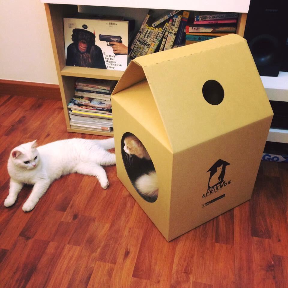 กล่องกระดาษลูกฟูก ทำบ้านแมว